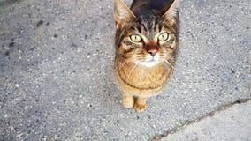 Gullig katt som ser mig Arkivbilder