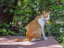 Gullig katt som sitter på tegelplattagolvet med sidabakgrund royaltyfri fotografi