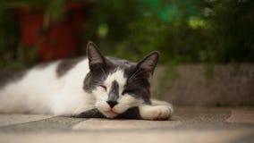 Gullig katt som sover grön bakgrund Royaltyfri Foto