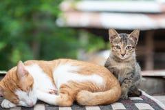 Gullig katt som sover med kattungen Royaltyfria Foton