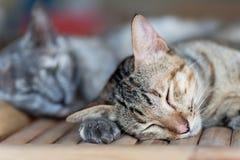 Gullig katt som sover på trätabellen Fotografering för Bildbyråer