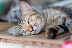 Gullig katt som sover på trätabellen Royaltyfria Bilder