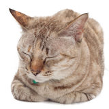 Gullig katt som sover på vit bakgrund Arkivfoto