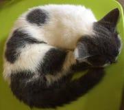 Gullig katt som tar en ta sig en tupplur arkivfoton