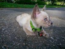 Gullig katt som tycker om hans tillgängliga ljus för liv Royaltyfri Foto