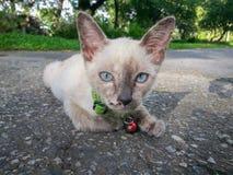 Gullig katt som tycker om hans tillgängliga ljus för liv Royaltyfri Fotografi