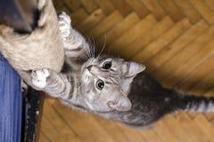 Gullig katt som vässar playfully hans skarpa jordluckrare på trästrålen som slås in i rep arkivbilder