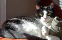 Gullig katt som varar slö i sunen - insida Royaltyfri Foto