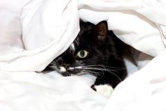 Gullig katt under en filt Arkivbilder