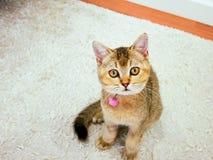 Gullig kattblick på dig fotografering för bildbyråer