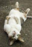 Gullig kattlögn Fotografering för Bildbyråer