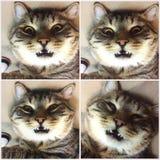 Gullig kattnedgång i sömn Arkivbild