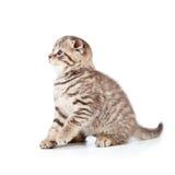 Gullig kattpott på white Arkivbilder