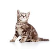 Gullig kattpott som ser upp Arkivfoto
