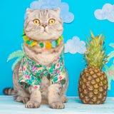 Gullig kattskjorta på semester mot bakgrunden av ananas och palmträd Begreppet av vilar, avkoppling och loppet royaltyfria bilder