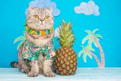 Gullig kattskjorta på semester mot bakgrunden av ananas och palmträd Begreppet av vilar, avkoppling och loppet arkivfoton