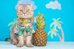 Gullig kattskjorta på semester mot bakgrunden av ananas och palmträd Begreppet av vilar, avkoppling och loppet fotografering för bildbyråer