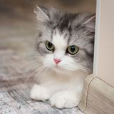 Gullig kattstående, fyrkantigt foto Royaltyfria Foton