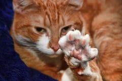 Gullig kattsträckning Fotografering för Bildbyråer