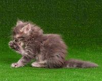 Gullig kattunge Royaltyfri Fotografi