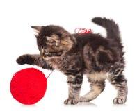 Gullig kattunge Arkivbild