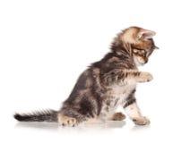 Gullig kattunge Fotografering för Bildbyråer