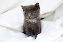 Gullig kattunge Arkivfoto