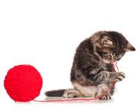 Gullig kattunge Arkivbilder