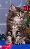 Gullig kattunge Royaltyfria Foton