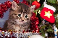 Gullig kattunge Royaltyfri Foto