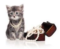 Gullig kattunge Arkivfoton