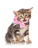 Gullig kattunge Royaltyfri Bild