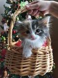 gullig kattunge för korg Royaltyfria Bilder