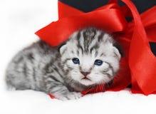 Gullig kattunge för ledsen kattunge med en röd pilbåge Fotografering för Bildbyråer
