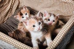 Gullig kattunge fyra Royaltyfri Foto