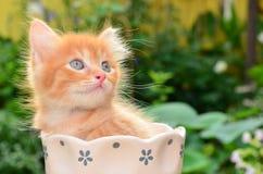 Gullig kattunge i blommakruka Fotografering för Bildbyråer