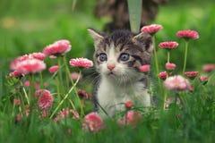 Gullig kattunge i blommorna arkivbild