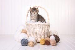 Gullig kattunge i en korg med garn på vit Royaltyfri Fotografi