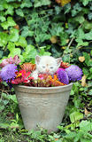Gullig kattunge i en vas Arkivbild