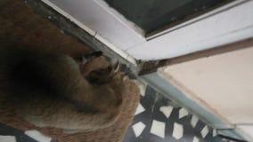 Gullig kattunge i huset stock video