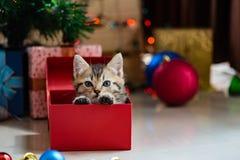 Gullig kattunge i jul Gullig kattunge i jul Arkivfoto