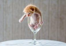 Gullig kattunge i vinexponeringsglas med texturerad bakgrund Arkivbild