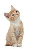 gullig kattunge little Royaltyfria Bilder