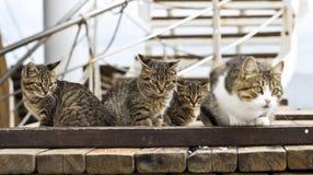 gullig kattunge little Arkivfoto