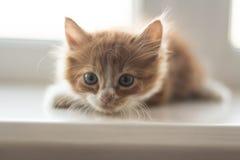 gullig kattunge little Arkivbilder