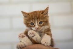 gullig kattunge little Royaltyfri Foto