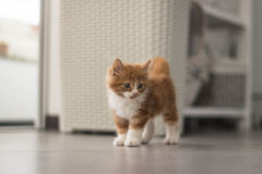 gullig kattunge little Arkivbild