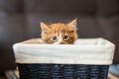 gullig kattunge little Royaltyfri Bild