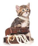 gullig kattunge little Royaltyfri Fotografi