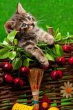 gullig kattunge little Fotografering för Bildbyråer